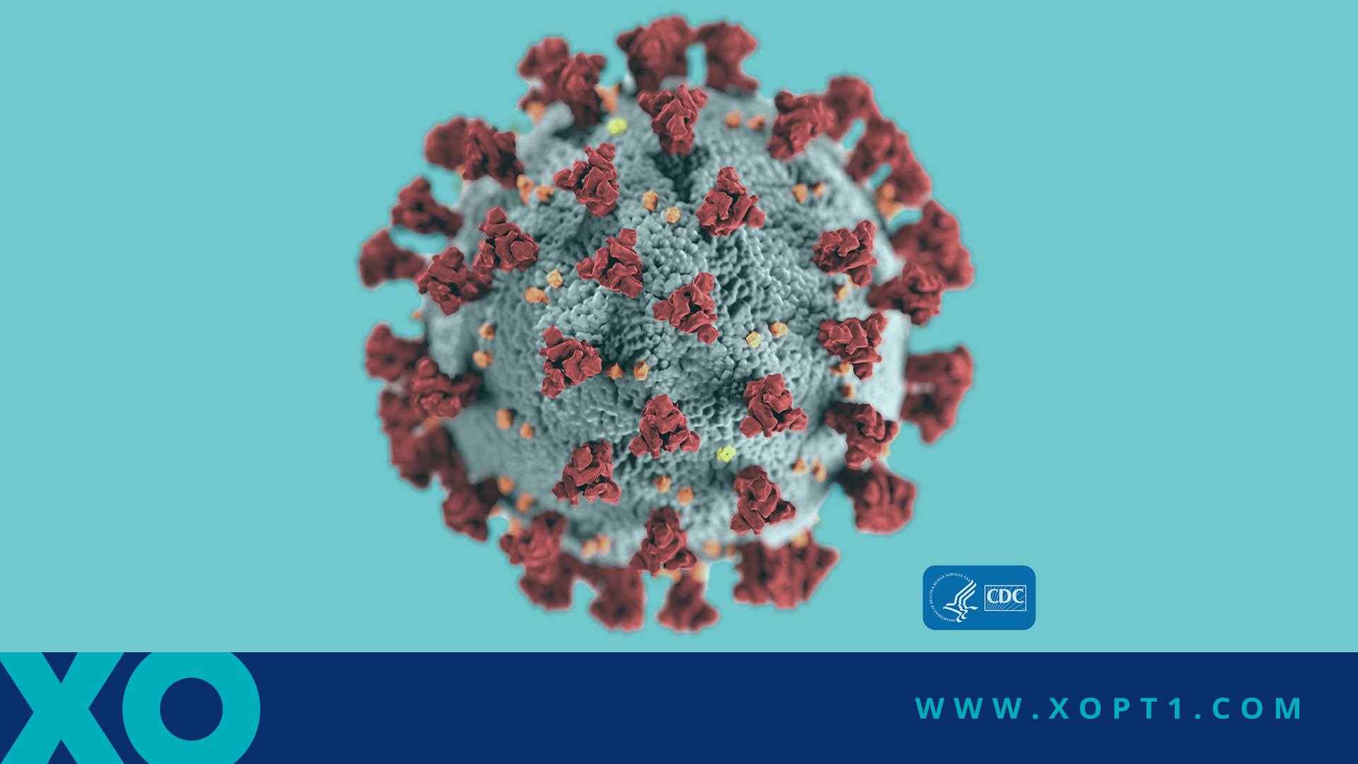 Info for Our Patients about the Coronavirus (COVID-19)